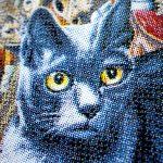 Affiche Le Chat Bertrand Latuner Julia Mancini